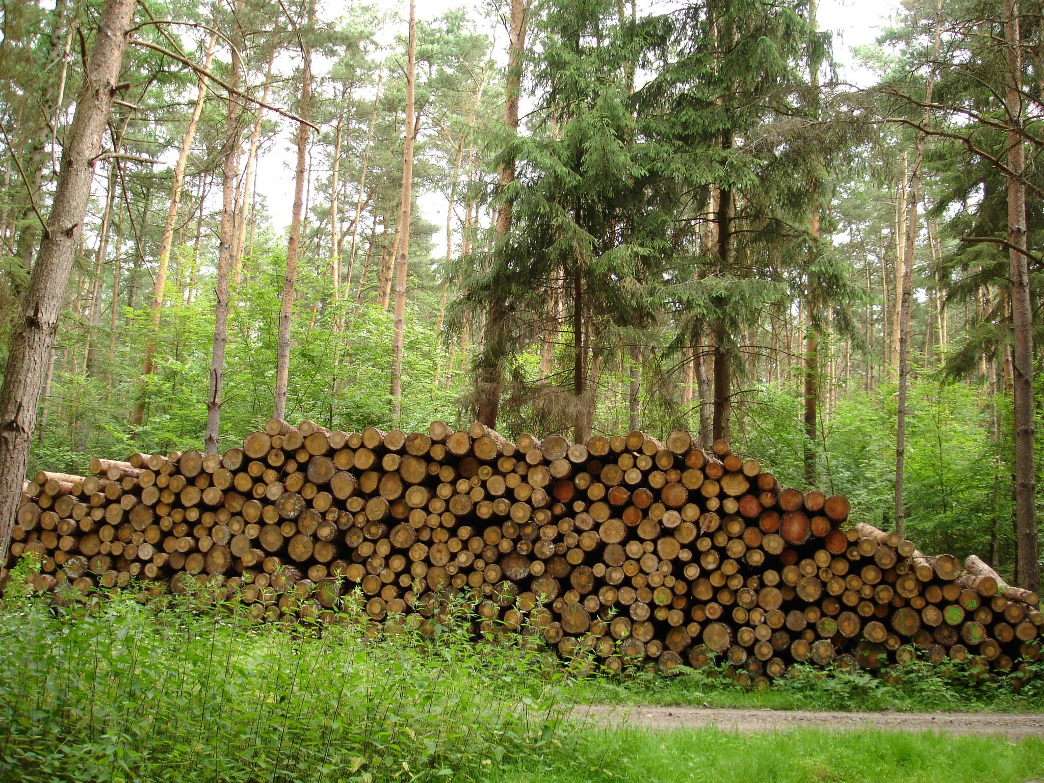 Wirtschaftswald (Foto: Sibylle Winkel)