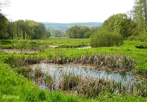 Amphibien-Paradies (Foto: Sibylle Winkel)